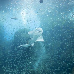 #発見!深海の魚