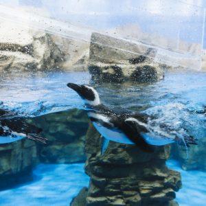 【台湾】今、最も注目されている水族館〈Xpark〉へ。天井まで届く大きな水槽は圧巻!