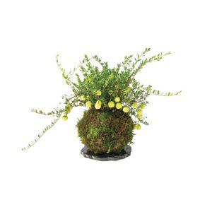 「クランベリーの苔玉」3,000円
