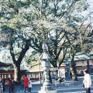 浅間大社にはご神木の桜の木が500本も植えられている。3〜4月には夜桜の演出に提灯が灯され、境内は様変わり。