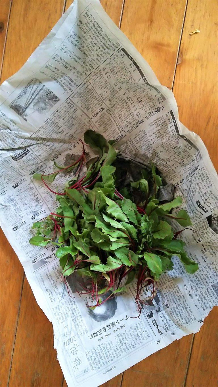 「新聞紙は野菜を包むのにも使えます。鮮度が保たれやすい。環境が許せば生ごみはコンポストへ」