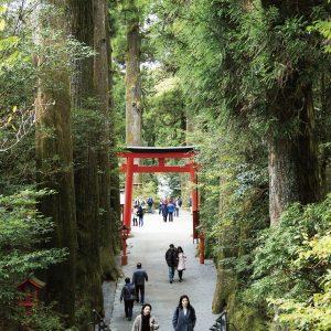 表参道の両側は杉林。その先には芦ノ湖が広がる。