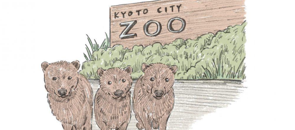 【京都人が教える!】長く愛されているお出かけスポット5選。日本で2番目に歴史ある動物園も。