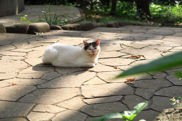 地域の方々に可愛がられているという看板猫。