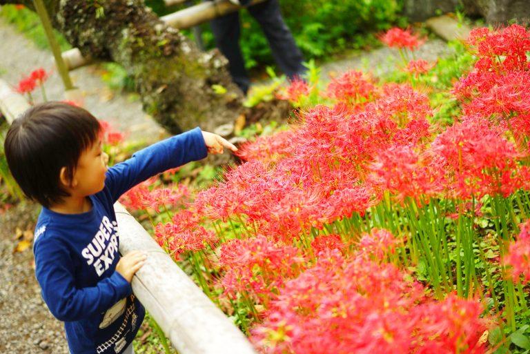 前田有紀の『週末・気分転〈花〉』