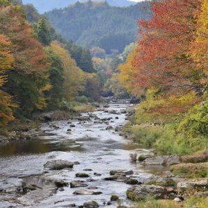 川沿いに並ぶ木々が彩る紅葉シーズンには、毎年多くの人が集まる。