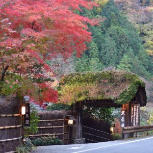 入り口から色鮮やかな紅葉が出迎えてくれる。