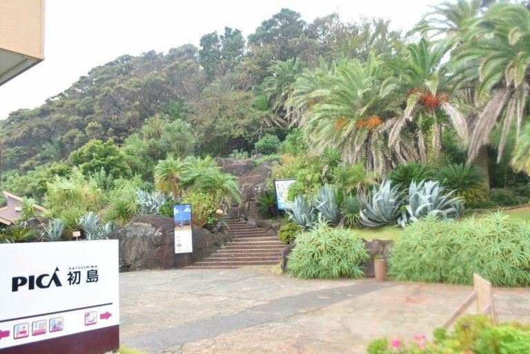 巨大な亜熱帯植物がまるでジャングルみたい!