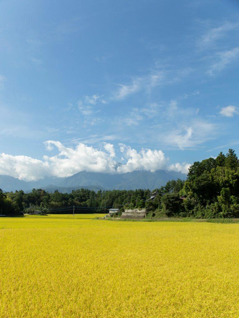 風光明媚な北杜市にある稲田で育つお米。東洋ライス独自のBG無洗米加工によって、環境に優しく、おいしいお米が出来上がる。