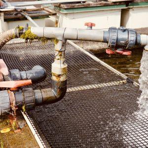 美しい天然水をかけ流している水槽。