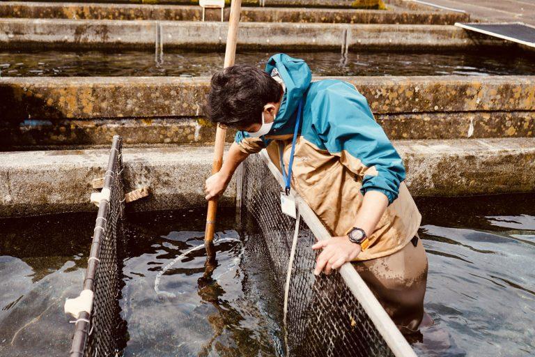 普段は見学できませんが、特別に視察が叶いました。水槽から「富士の介」をすくって見せてくれる主任研究員の三浦さん。