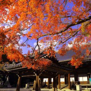 西教寺の紅葉。
