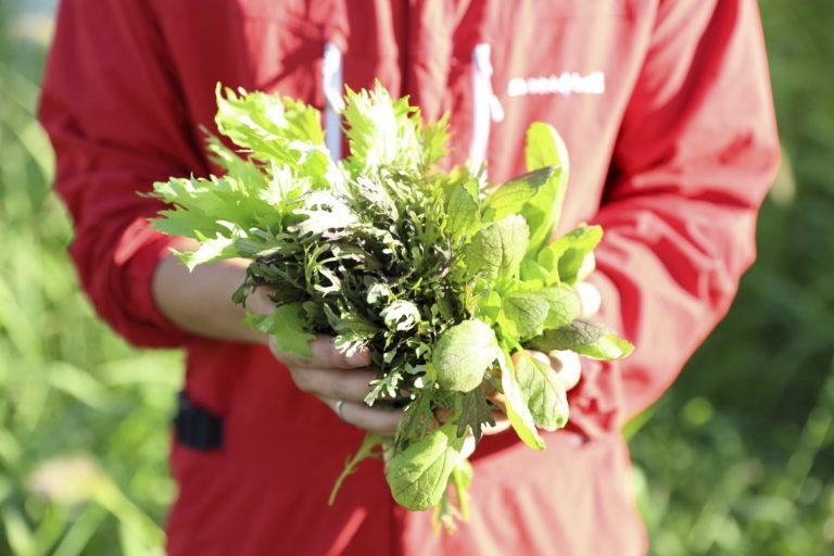 食事には有機農業に取り組む自社農場で育てた野菜などを提供。収穫体験なども行う。