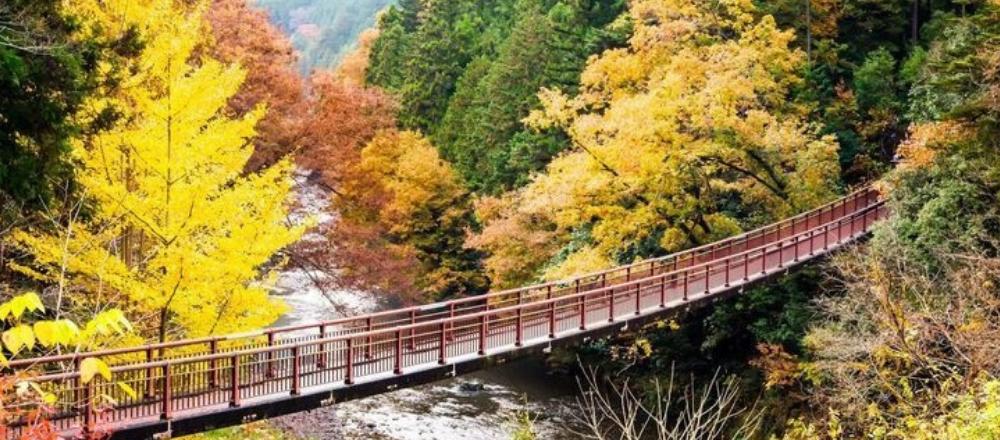 東京裏山ワンダーランド 謎解きエコツアー1