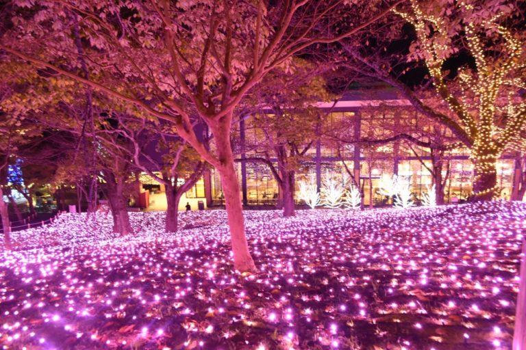 「光の花畑」。