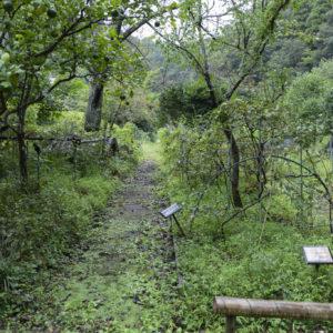 入り口は小さな階段が目印。木々のトンネルをくぐり抜けた先に現れるのは薬草園。