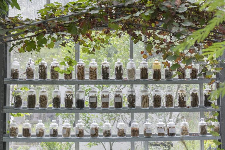 ずらりと並んだ和漢植物。