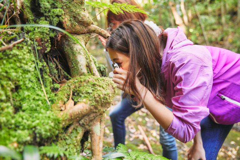 小さな植物の世界は、ルーペでじっくり観察。
