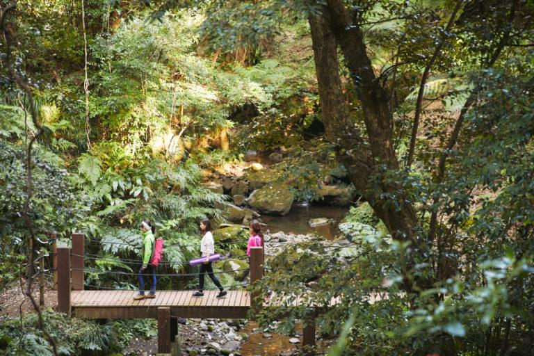森林浴をしながら10分ほど歩きます。