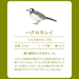 outdoor_#1-birdwatching-2