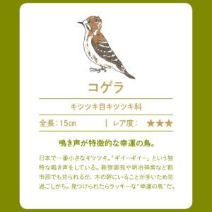 outdoor_#1-birdwatching-3