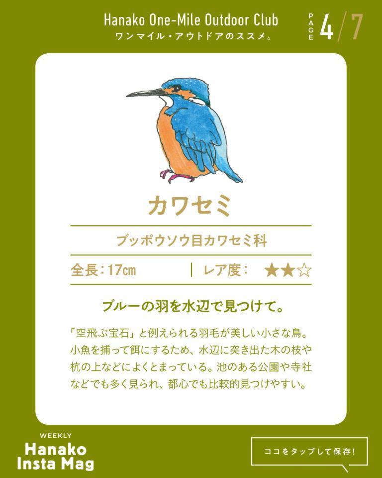 outdoor_#1-birdwatching-4