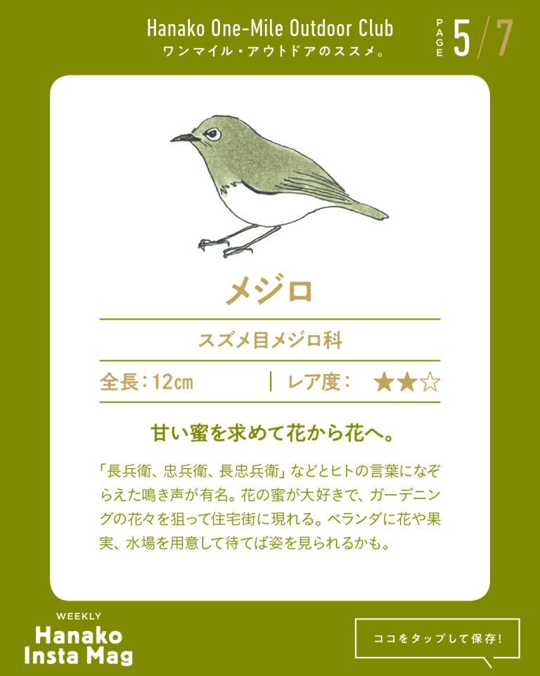 outdoor_#1-birdwatching-5