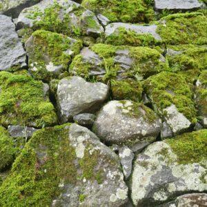 ハートと亀の形をした石垣、見つけましたか?