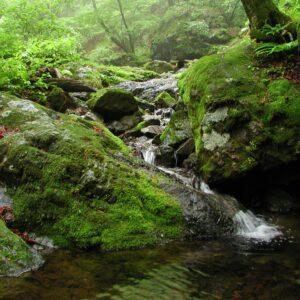 森林浴でリフレッシュ。