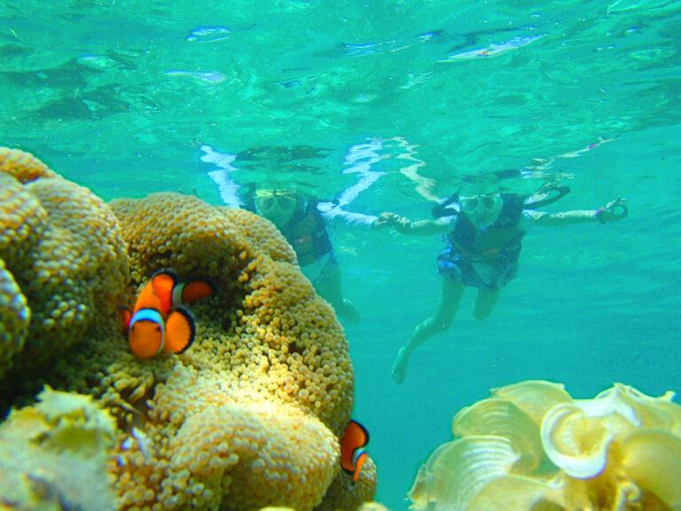 シュノーケリングで石垣島の美しい海を探検。