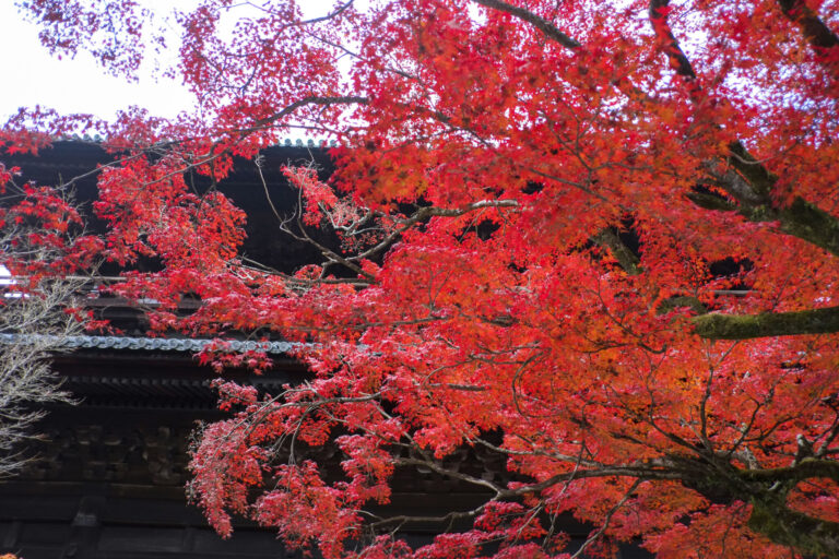 京都 永観堂