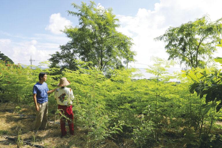 〈もだま工房〉の山で、代表の彦田さんと野村さん。植物博士・彦田さんはモリンガの話を始めたら止まらない!