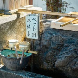 手水舎には、かわいらしいペット専用の水場が。