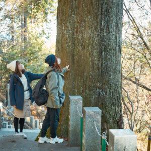 樹齢400年の御神木は迫力満点!