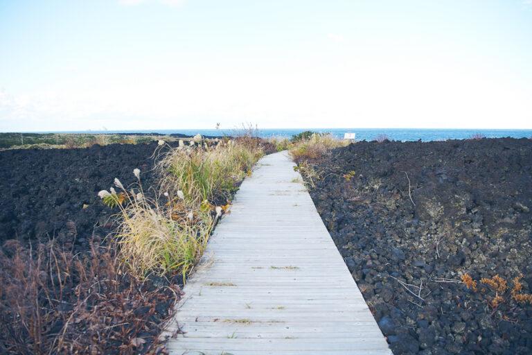 溶岩に囲まれた散歩道。三宅島の自然を近くで感じることができます。