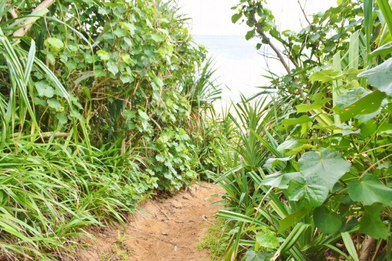 草木が生い茂る小路を歩いた先には……?
