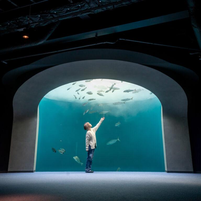 #四国水族館 #渦潮の景 #おすすめフォトスポット