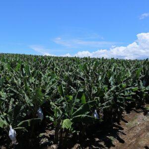 バナナが人と自然の未来をつくる!? ユニフルーティーの5つのトライ
