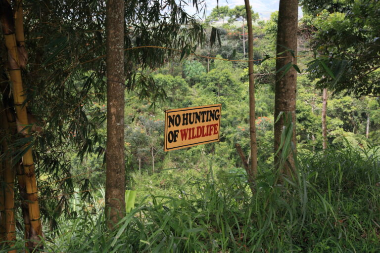 農園を含む管理区域内では樹木の伐採を禁止し、さらに植樹を続けることで、様々な生き物の棲み処となる自然環境を保全している。