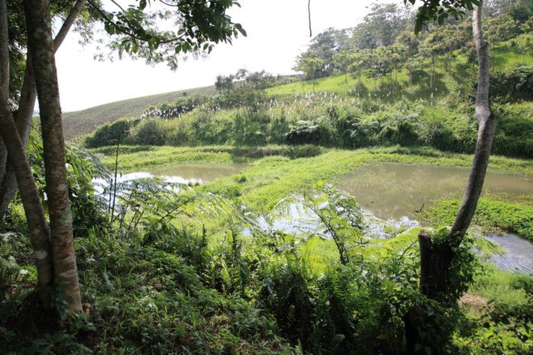 排出された使用後の水を段階的に浄化していく、ため池。