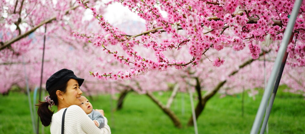 「桃の節句」は女の子のみのお祭り?春の代名詞「桃」の話。