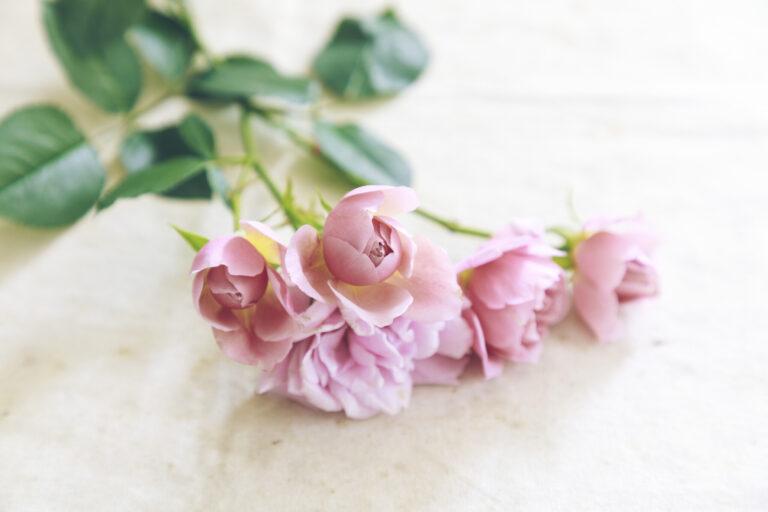 【スプレー咲き】
