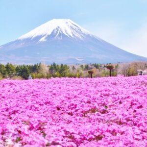 【山梨】ドライブに最適!富士山の絶景が眺められるスポット5選。