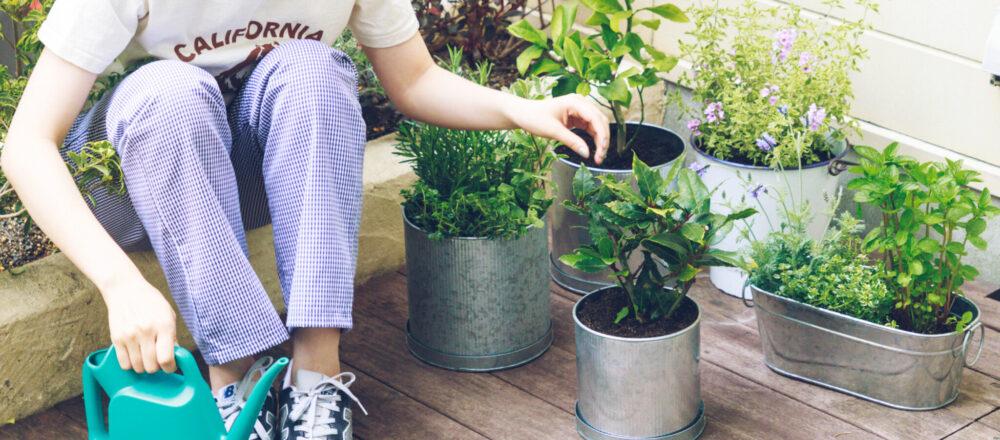 <span>翌日からの楽しみは観察すること。</span> おうち菜園のコツは翌日から!【プロが教える】初心者もできる簡単菜園づくりの基本。