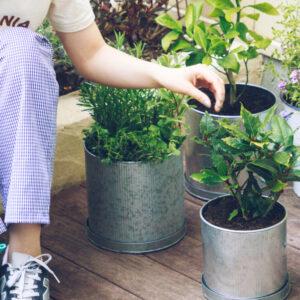 おうち菜園のコツは翌日から!【プロが教える】初心者もできる簡単菜園づくりの基本。