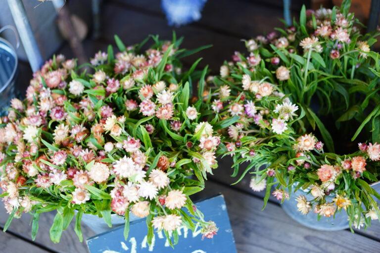 〈Flowers for lena〉