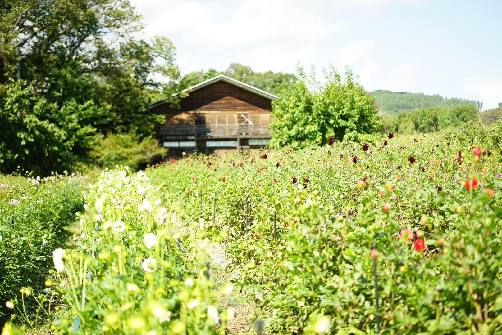 【山梨】八ヶ岳にあるお花屋さん〈Flowers for lena〉の、丁寧に育てられたお花たちに囲まれて。
