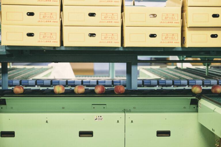 光センサーで測定される選果場の桃。