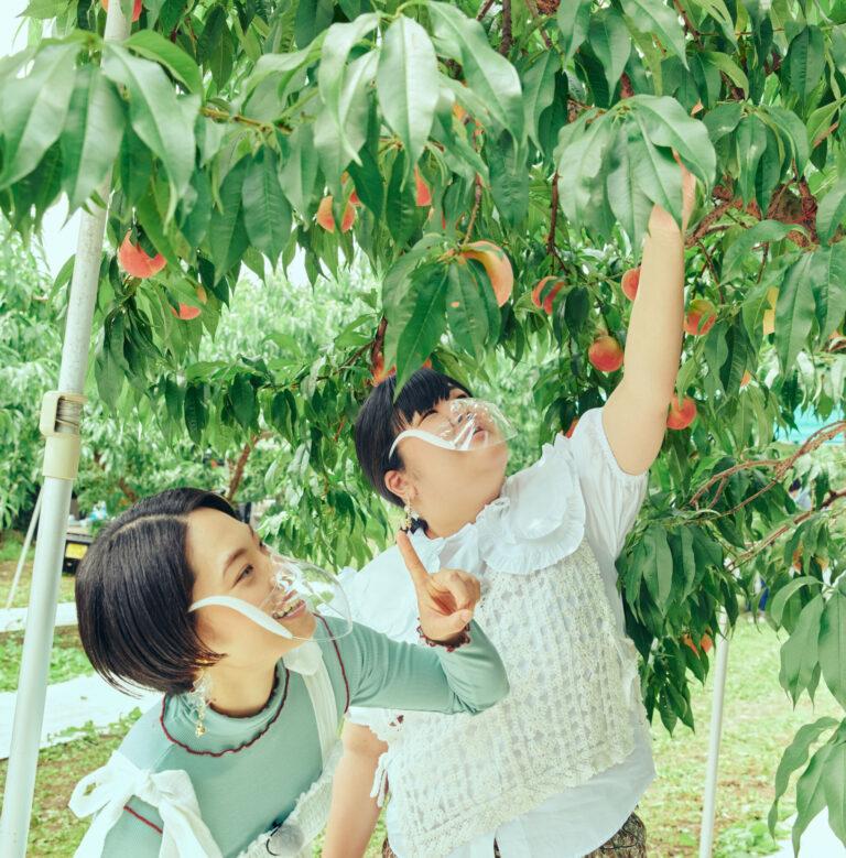 赤く色づいて、丸々とした桃が収穫どき。