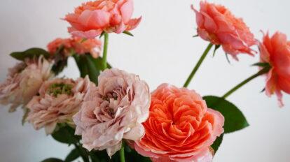 秋のお花を楽しもう。フラワーアーティスト・前田有紀がおすすめ「秋バラ」の楽しみ方